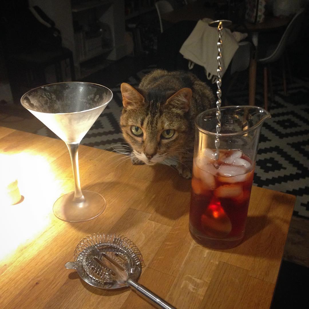 Barfly Cat 2