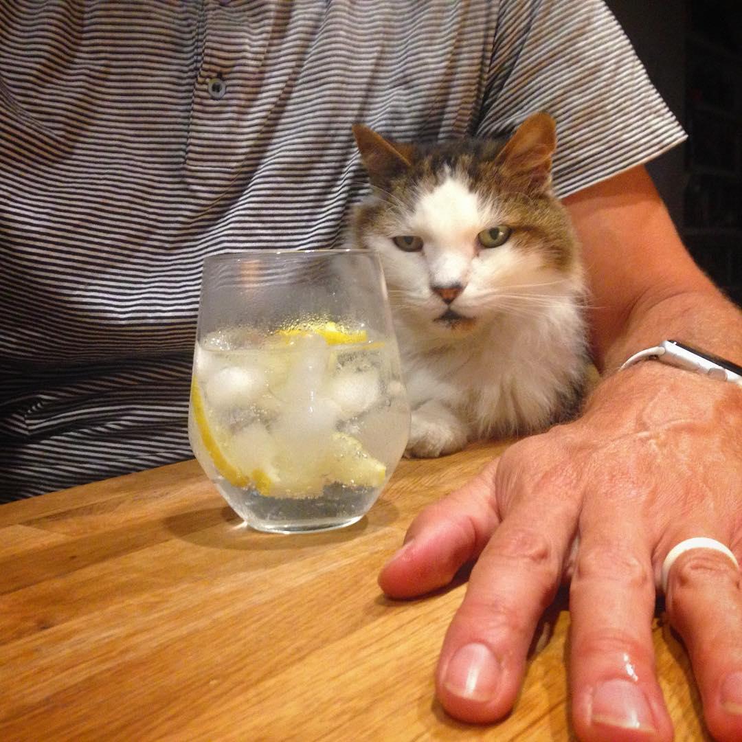 Barfly Cat, Ferris