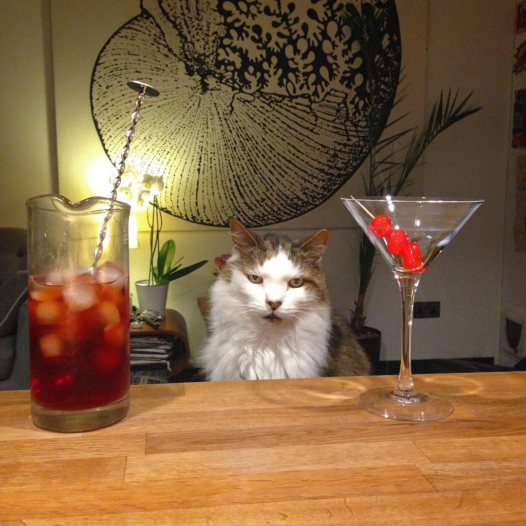 First cocktail with Ferris after a 3 week holiday