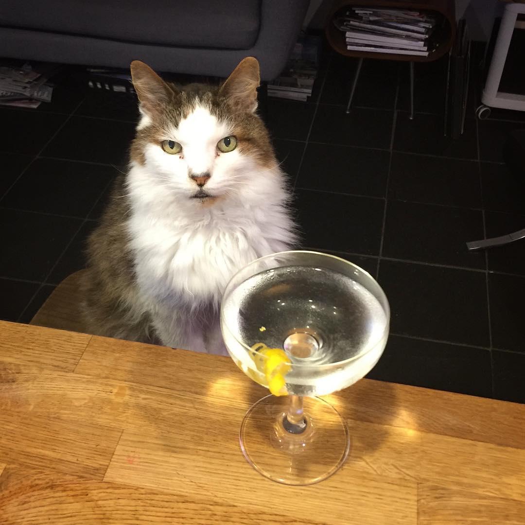 Puuurfect Martini