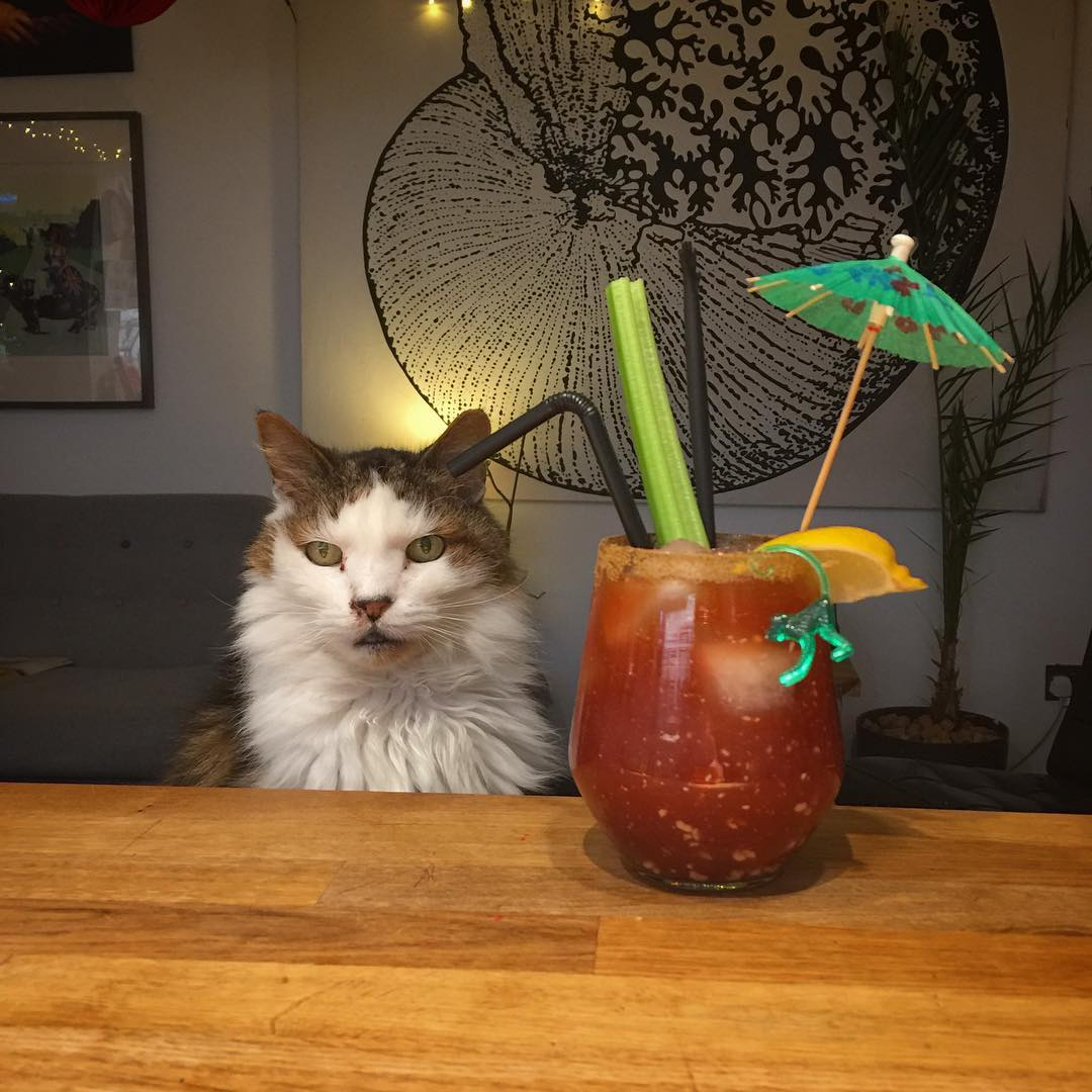 Claw of the cat that scratched you. Rum Bloody Caesar for with Ferris @welcometomybar