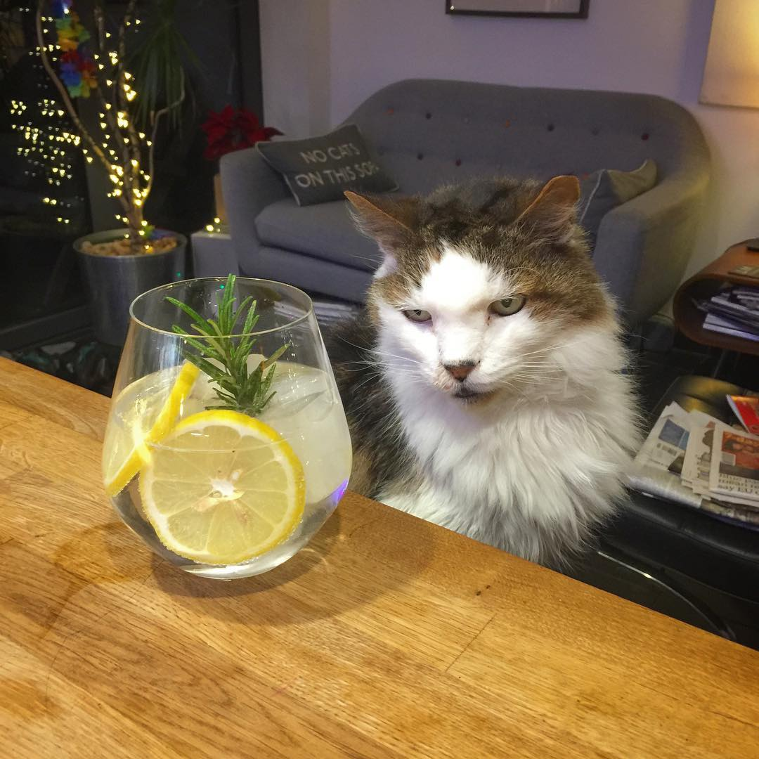 A pensive G&T with