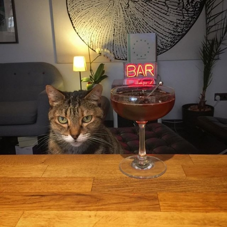 Cats and cocktails