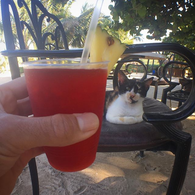 Local cats a little hesitant about Daiquiris
