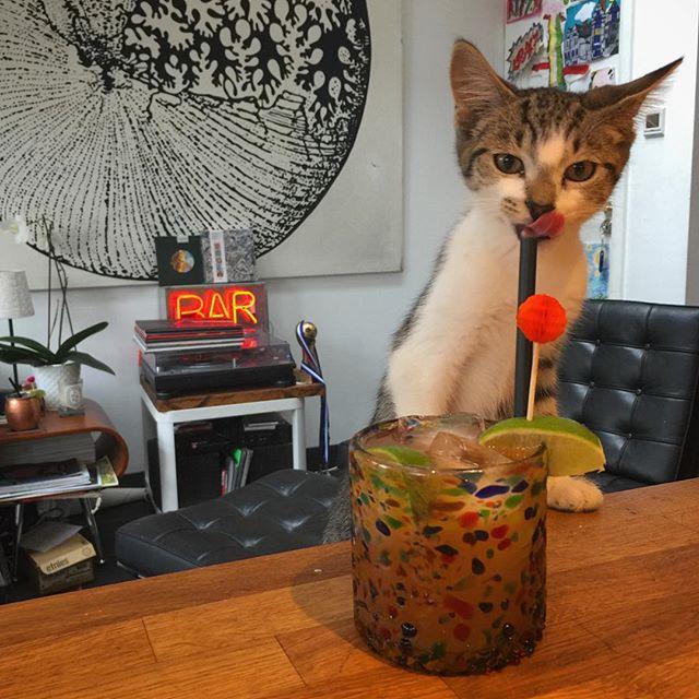 Lip-lickin' Cocktails