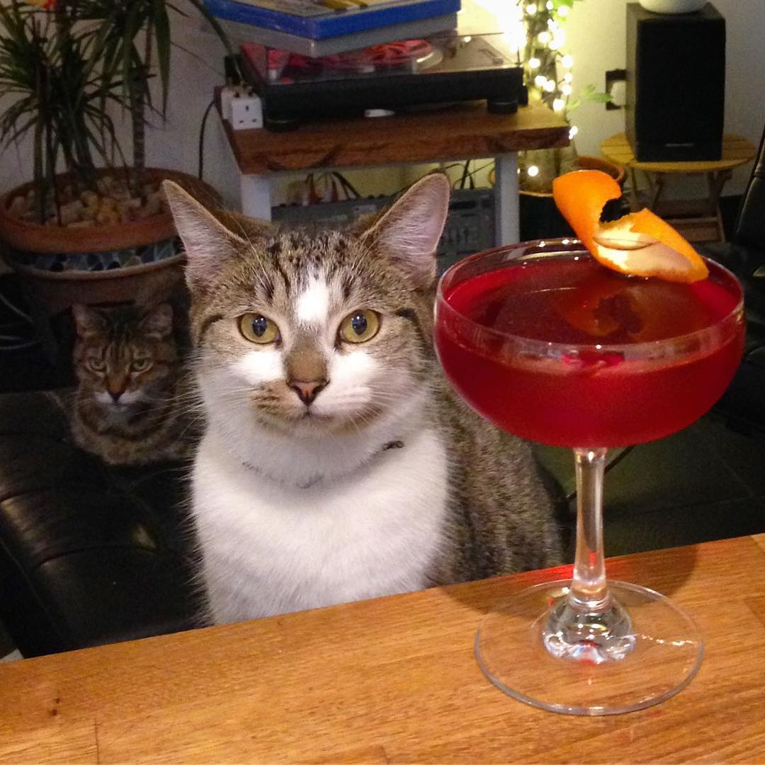 A Barfly Cat and her wing-woman