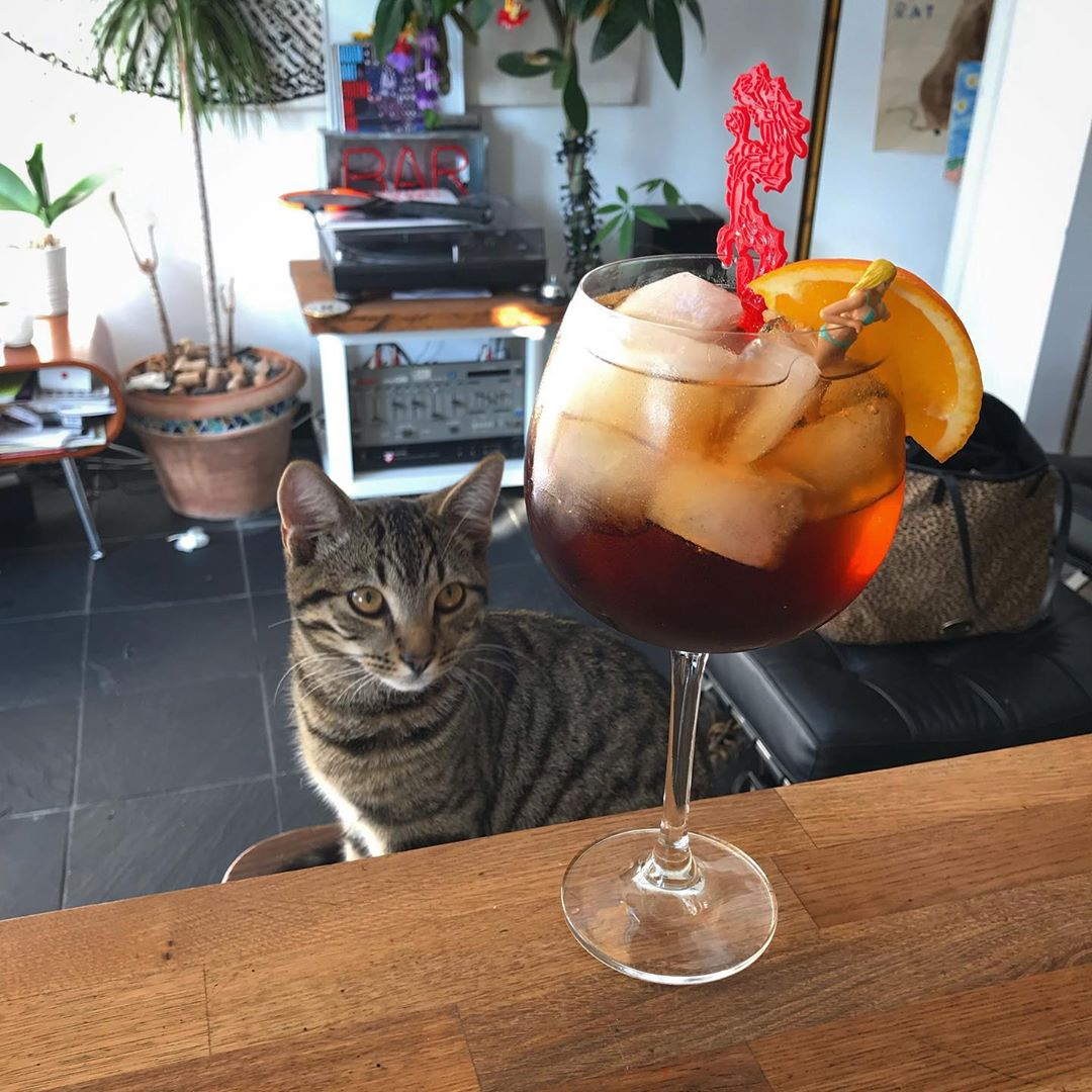 Afternoon Cynar Spritz. Certainly a cat can add sweetness to a photo, but sweet vermouth is recommended for this cocktail