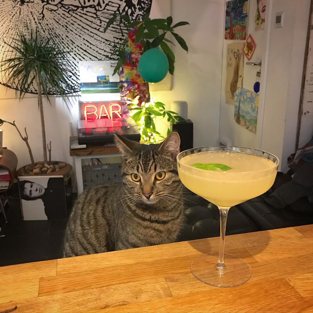 Friday evening Corpse Reviver No.2, hold the mint, slap of fresh basil