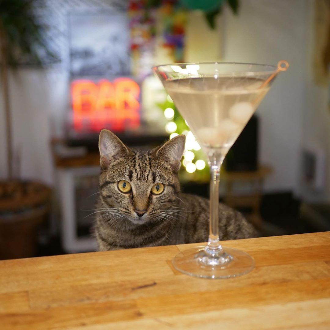 Sunday evening Martinis