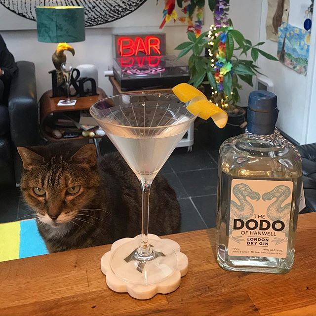 Local Gin for local cool cats